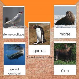 Maaademoiselle A. Shop - 10 idées d'activités pour utiliser les cartes Animaux polaires - Cartes de nomenclature Animaux polaires
