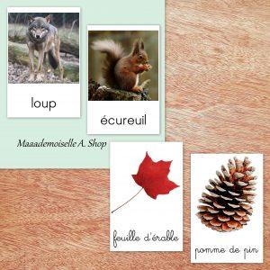 Maaademoiselle A. Shop - Cartes de nomenclature - Animaux de la forêt et trésors d'automne
