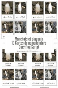 Maaademoiselle A. Shop - Cartes de nomenclature - Manchots et pingouin