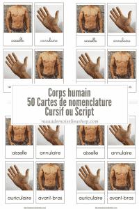Maaademoiselle A. Shop - Cartes de nomenclature - Corps humain