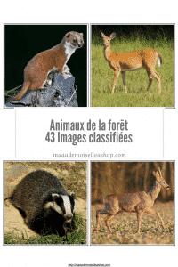 Maaademoiselle A. Shop - Images classifiées - Animaux de la forêt