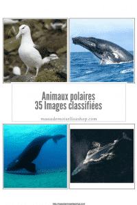 Maaademoiselle A. Shop - Nouveautés de janvier 2021 - Images classifiées Animaux polaires