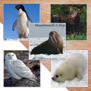 Maaademoiselle A. Shop - 10 idées d'activités pour utiliser les cartes Animaux polaires - Images classifiées Animaux polaires
