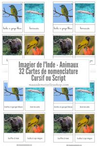 Maaademoiselle A. Shop - Nouveautés d'avril 2021 - Cartes de nomenclature - Imagier de l'Inde - Animaux