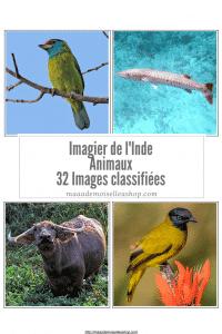 Maaademoiselle A. Shop - Nouveautés d'avril 2021 - Images classifiées - Imagier de l'Inde - Animaux